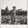 Tobacco farmer, owner of 100 acres. Person County, North Carolina.