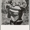 Picker demonstrates how pears are ringed. Washington, Yakima Valley. See general caption number 34