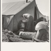 Living conditions for migrant potato pickers. Tulelake, Siskiyou County, California. General caption number 63-1.