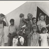 In Farm Security Administration (FSA) migrant labor camp during pea harvest. Family from Oklahoma with eleven children. Father, eldest daughter and eldest son working.
