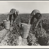 Pea pickers. Wages (1939): one cent per pound. Hamper holds about twenty eight pounds. Near Niland, Imperial County, California