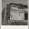 Shows construction of chicken house, sage bush thatched. Dead Ox Flat, Malheur County, Oregon (name: Hull). General caption number 67-111.