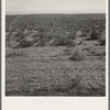 View from the Smith's place across the road, showing uncleared land. Dead Ox Flat. Malheur County, Oregon. General caption 67-111.