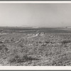 Nyssa Heights, Malheur County, Oregon. Sage bush, hay field, farmstead, cattle in pasture. All farms in this view belong to FSA (Farm Security Administration) borrowers. General caption 66.