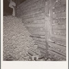 Potatoes in storage cellar at end of season. Merrill, Klamath County, Oregon