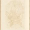 No. 1: Introduction; Dandelion; Red wild; Mullein; Garden cucumber