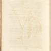No. 2: Shepherd's purse; Wild tansie; Rue; Wild rose