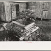 Primitive guard for tree protected from rabbits at farmhome of aged Cajun couple, near Crowley, Louisiana.