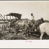 Part of machine developed by Negro for loading sugarcane onto trucks near New Iberia, Louisiana.