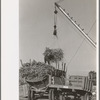 Removing batch of cane from truck at sugar mill near New Iberia, Louisiana.
