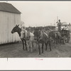 Mules and wagon, Port Barre, Louisiana.