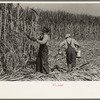 Sugarcane cutter and waterboy in field near New Iberia, Louisiana.
