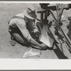 Day laborer adjusting plow points on tractor-drawn planter, near Ralls, Texas.