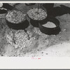 Biscuit being made in dutch oven on cattle ranch near Spur, Texas. Coals are piled on the lid of the dutch oven.