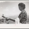 Spanish-American FSA client testing soap on end of stirring stick to see if it has cooked enough, Taos County, New Mexico.