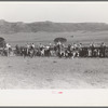 Cowboys driving cows down rodeo grounds, Bean Day, Wagon Mound, N.M.
