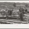 Farmers snaking out a log from a pile of timber on farm near Bradford, Vermont.