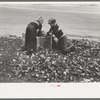 Boys gathering leaves into cardboard box, front lawn in Bradford, Vermont