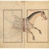Pegasus (Faras A'zam).