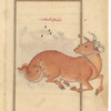 Aries (Hamal), as seen in the heavens. The mirror image on f. 79.