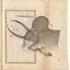 Taurus (Saur) as seen in the heavens. The mirror image of f. 85.