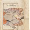 Virgo ('Uzrâ'), as seen on the heavens [= as seen on the celestial globe?]