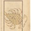 Scorpio ('Aqrab), [fols. 114v-115r]