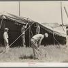 Erecting tent for Lasses-White show, Sikeston, Missouri