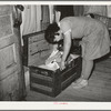 Daughter of Pomp Hall, Negro tenant farmer, looking through trunk of clothing. Creek County, Oklahoma