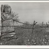 Fence made of old oil well cable. Creek County, Oklahoma