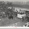 Auction of Hereford cattle at the San Angelo Fat Stock Show. San Angelo, Texas