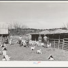 Goat shearers driving goats into shearing pen. Kids and shelters are in the foreground. Junction, Texas. Kimble County