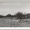 Kids in fenced enclosure in front of stockade. Ranch in Sutton County, Texas