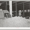 Pile of raw wool after it has been through dust and dirt removing machine. Wool scouring plant, San Marcos, Texas