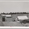 Brooder tents for chickens on the Arizona part-time farms. Maricopa County, Chandler Unit, Arizona