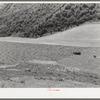 Mountain hay field. Cache County, Utah