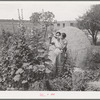 Spanish-American woman and baby in flower garden. Chamisal, New Mexico