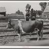 FSA cooperative bull. Box Elder County, Utah
