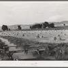 Irrigated farm. Montrose County, Colorado
