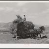Pitching hay on farm. Cornish, Utah