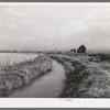 Irrigation ditch leading to farm, Montrose