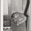 Sleeping children. Chicago, Illinois