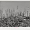 Burned over forest land. Clatsop County, Oregon
