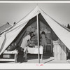 Library tent at the FSA (Farm Security Administration) mobile camp for migratory farm workers. Odell, Oregon. The girls working in the library receive credit in the Junior Campers League for work in the library
