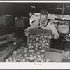 Dumping freshly-picked pears into chute which leads to washing vats. Hood River, Oregon
