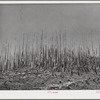 Cut-over burned-over forest land. Clatsop County, Oregon