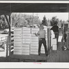 Packing crates of pears onto truck which will take them into town for shipment by rail to the markets. Hood River, Oregon
