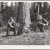 Grant County, Oregon. Malheur National Forest. Lumberjacks sawing down a tree