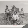 Ernest W. Kirk Jr. with his two sons on their farm near Ordway, Colorado. Fruits of their farm, coming from their labor, which has placed them in a few months from almost hopeless condition to a family with net worth approaching a thousand dollars