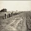 Men working at Dalworthington Gardens, Texas.